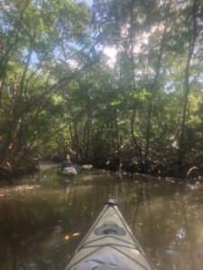 Kayaking mangrove tunnels in Sarasota